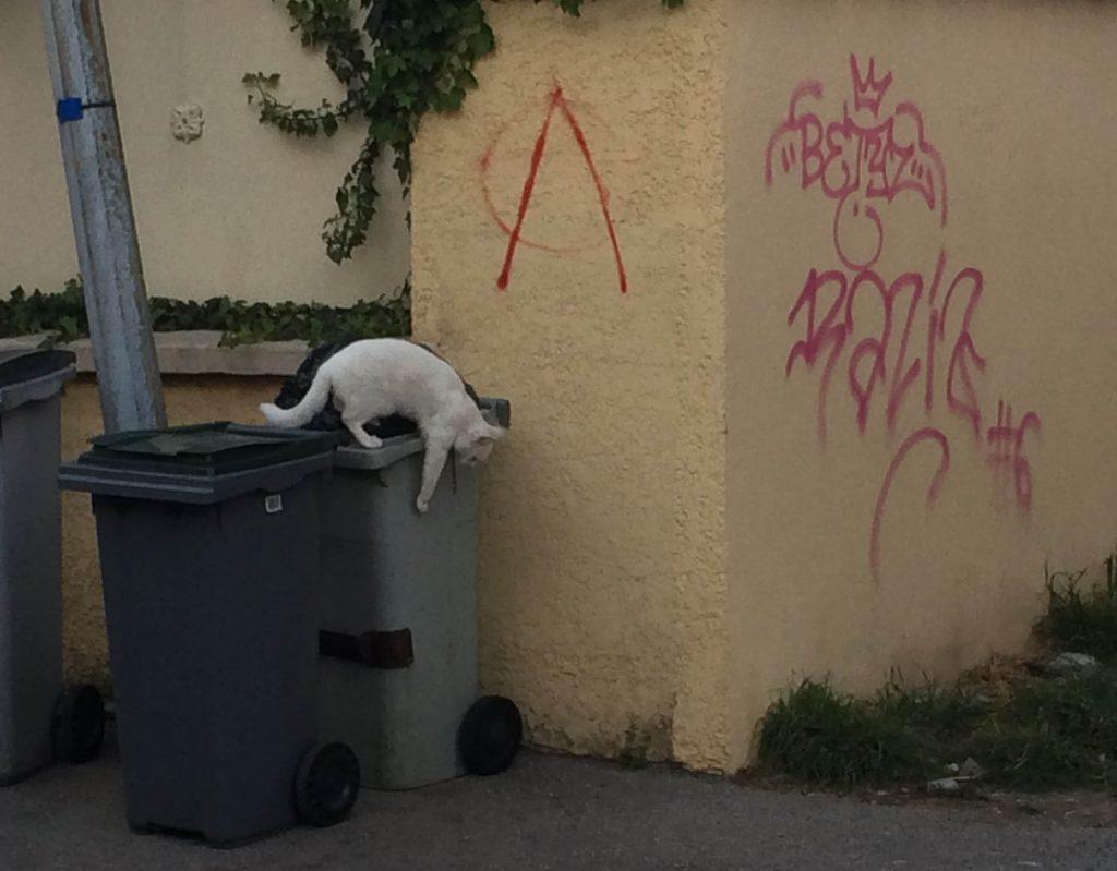 chat non confiné